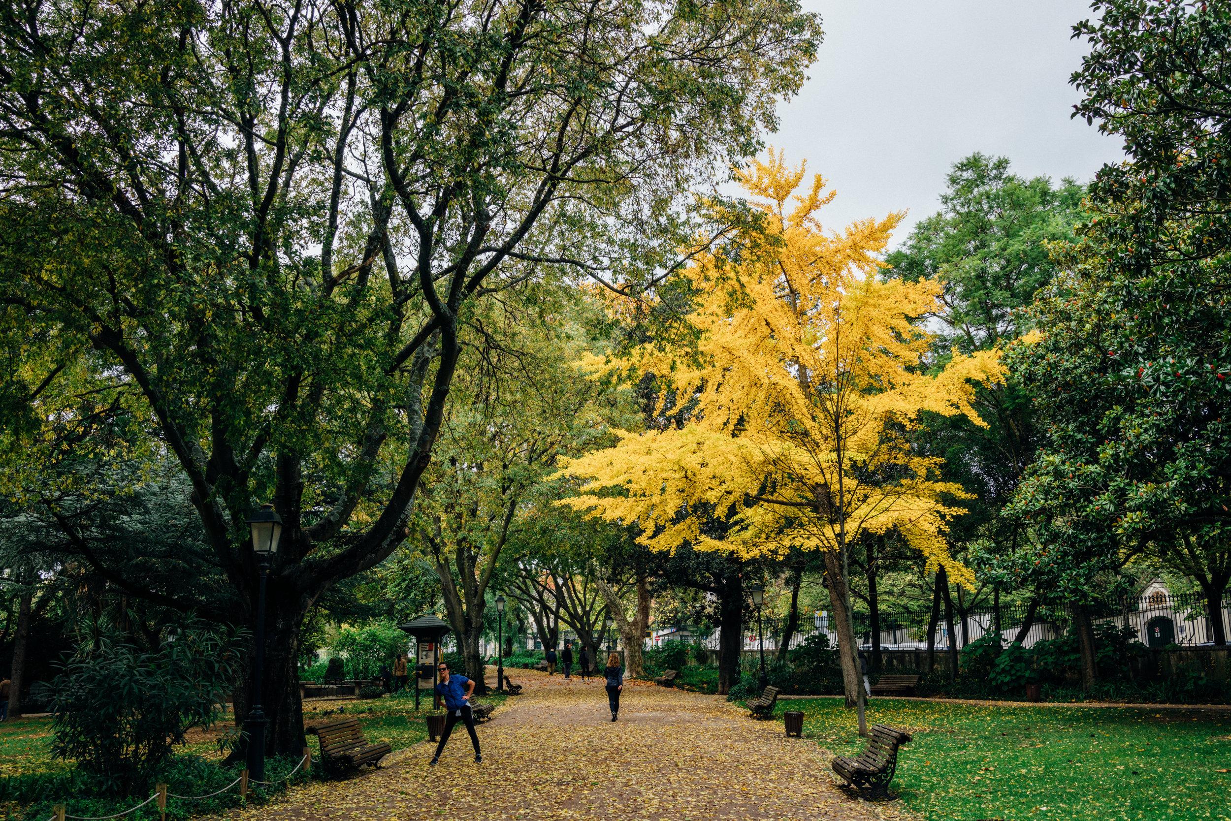 Jardim da Estrela  is one of my favorite parks in Lisbon