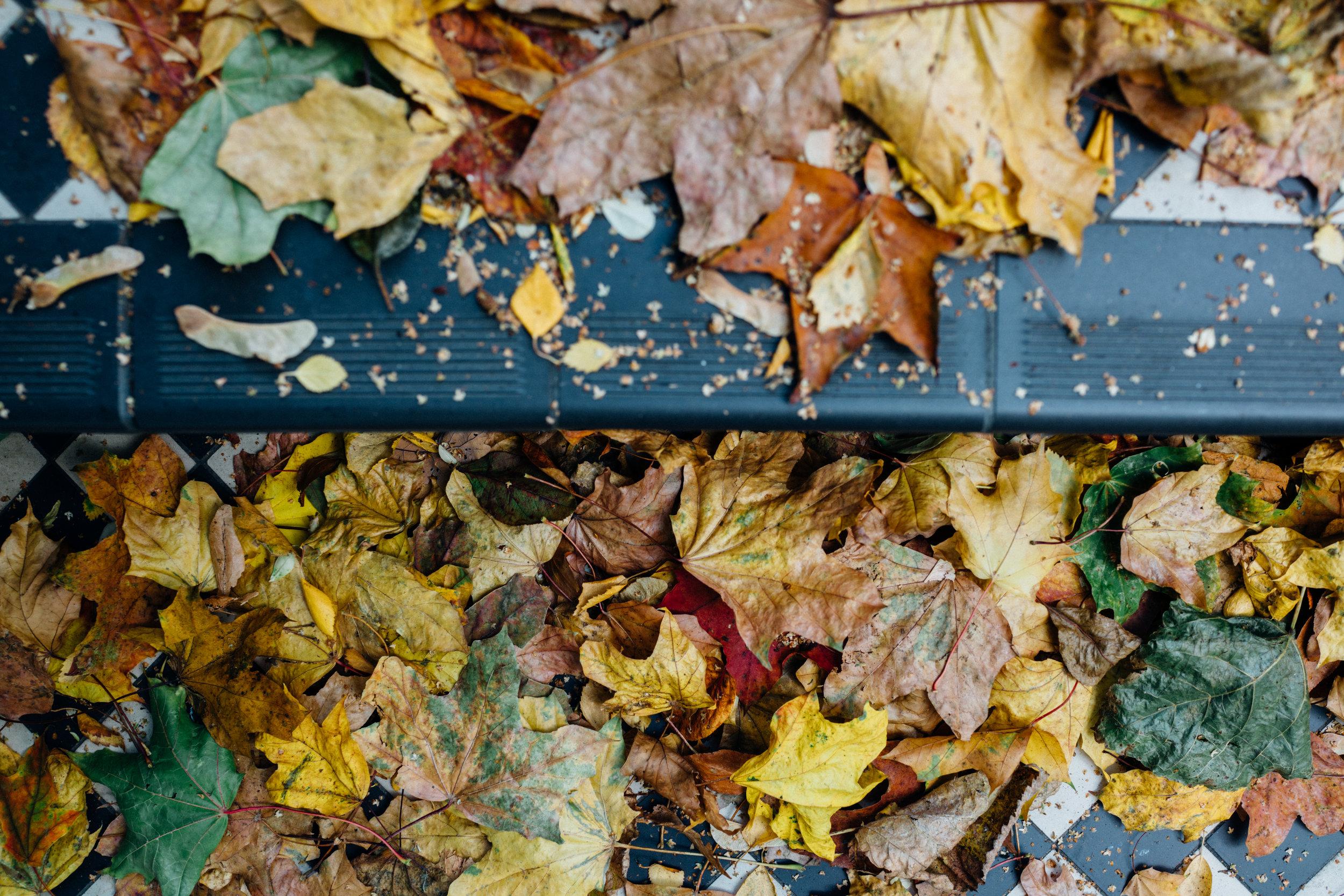 Fall, Belsize Park