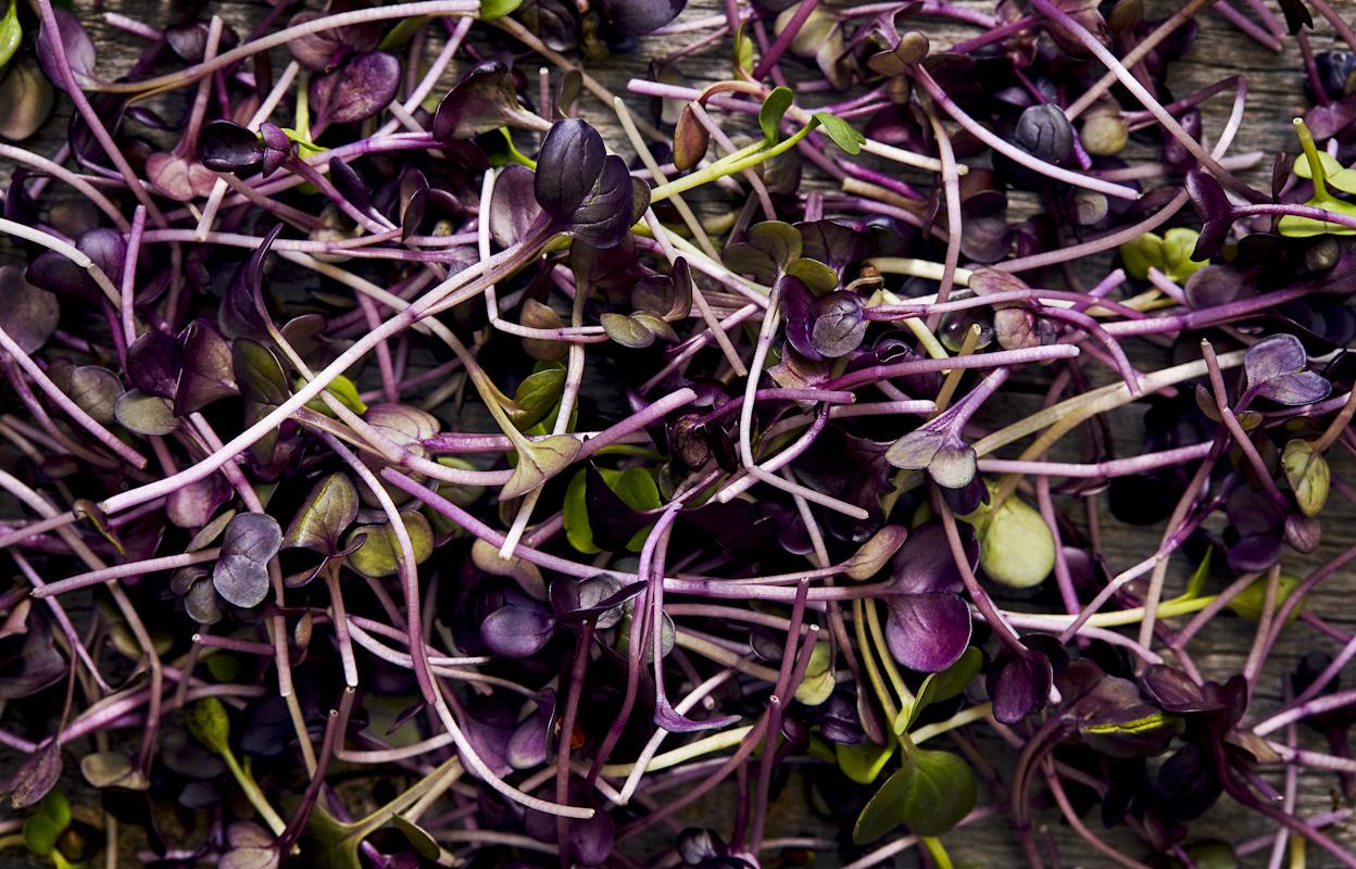 fresh-purple-clover-garnish-food-photography.jpg