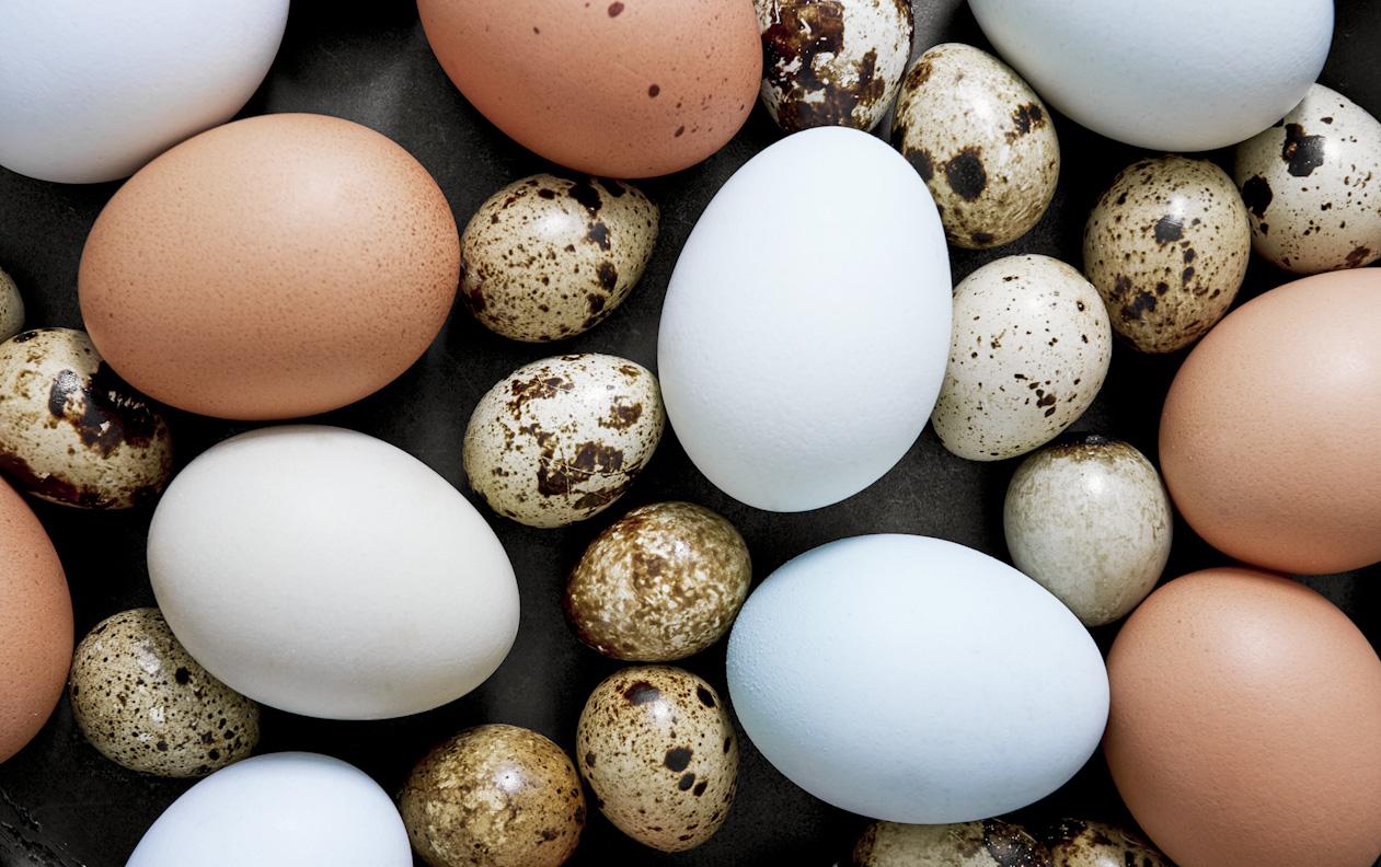 quail-eggs-brown-blue-eggs-food-photography.jpg