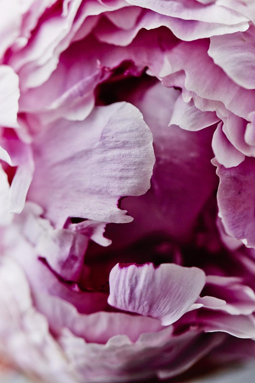 close-up-pink-peony-flower.jpg