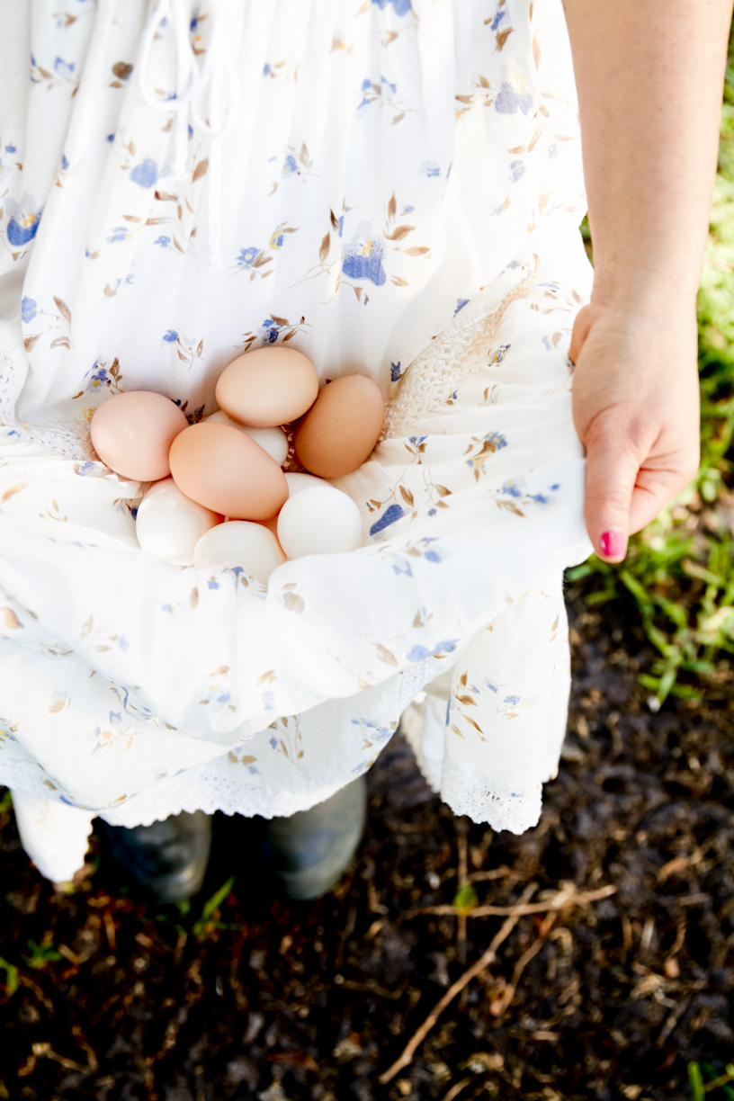 collecting-chickens-eggs-lifestyle-photography.jpg