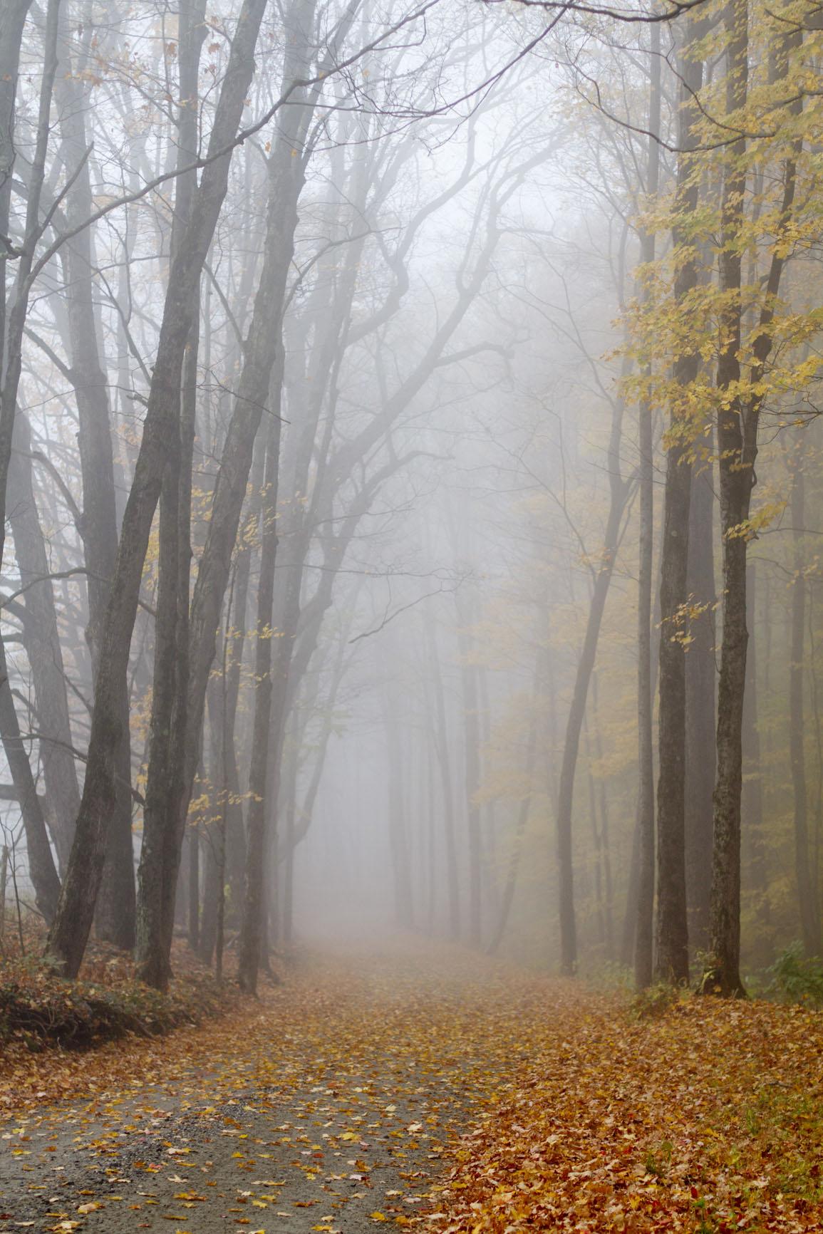 foggy-autumn-foliage-dirt-road.jpg