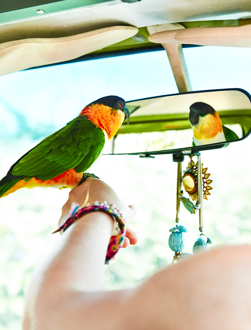green-parrot-rear-view-mirror-lifestyle-photography.jpg