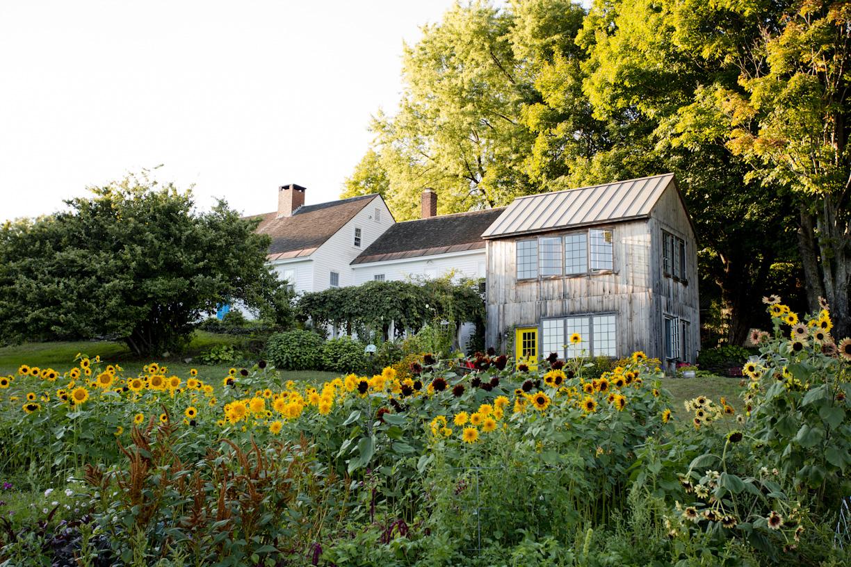 sunflower-garden-summer-yard-lifestyle-photography.jpg