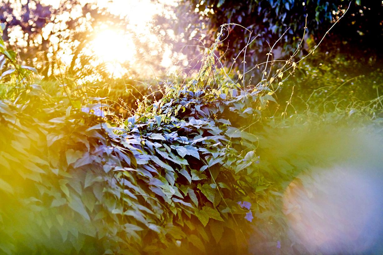 sunset-plants-lifestyle-photography.jpg