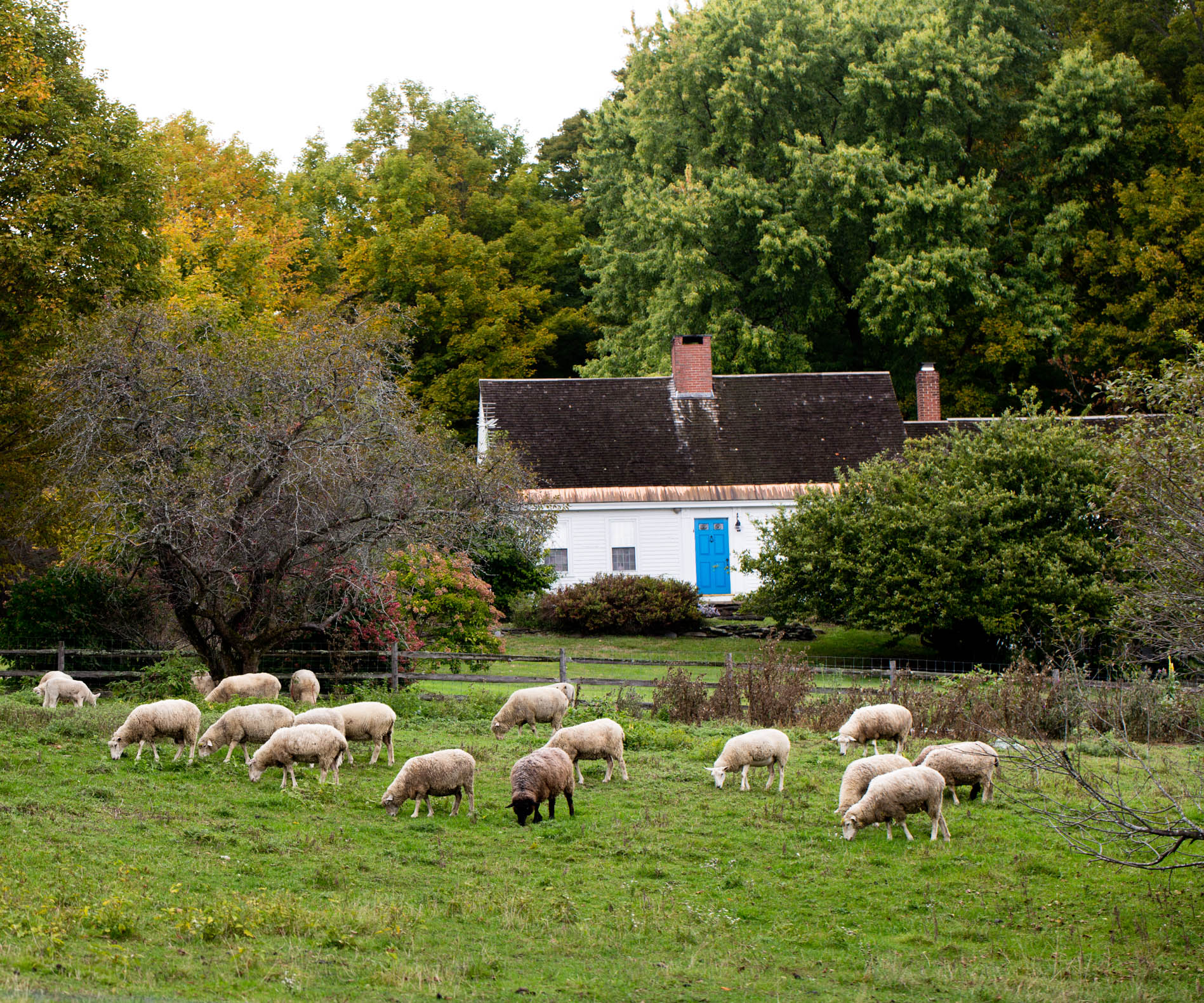 sheep-grazing-in-field-home.jpg