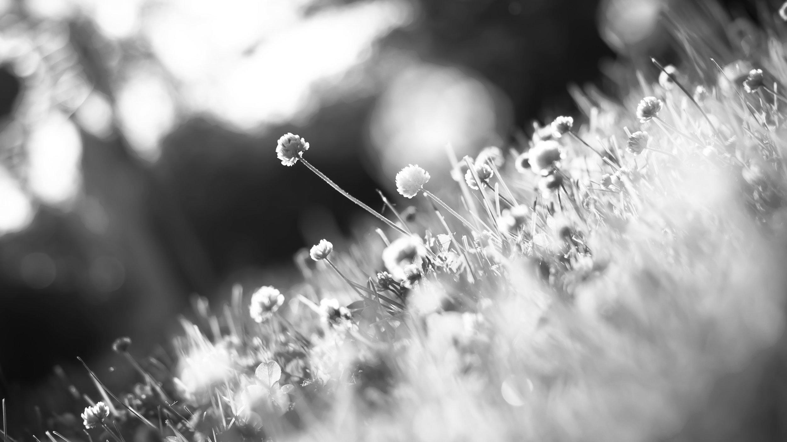 pexels-photo-102896-spring.jpeg