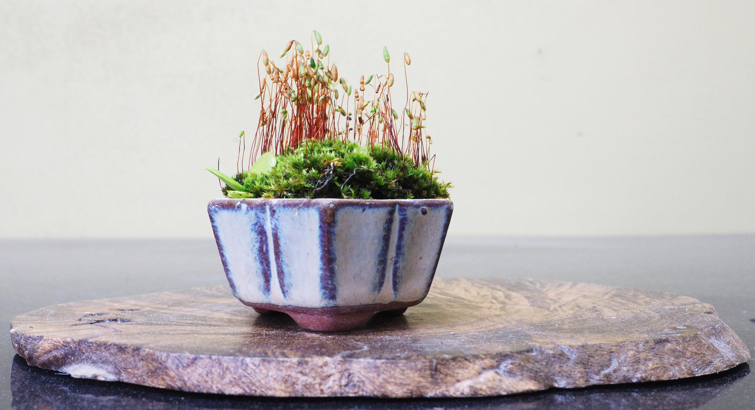 accent plant.jpg