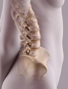 spine-550x712-231x300.jpg