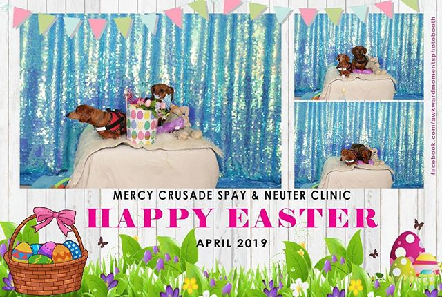 Come take your Easter Pictures! We'll be here until 1 pm today. Your donations benefits all our friends who come to the clinic 😉 #mercycrusadespayandneuterclinic #veterinarian #cityofoxnard #easter #spring #springtime #photography #countyofventura #petclinic