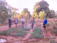 Mali Irrigation Project small.jpg