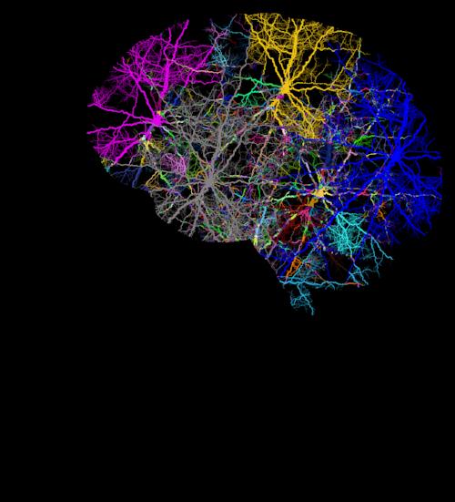 cranium-3244118_1280.png