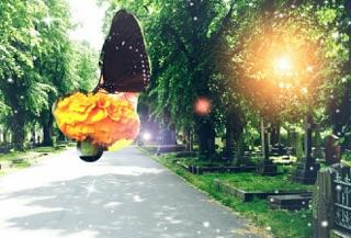 Butterfly Flower SUn.jpg