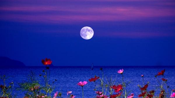 lakes-flowers-night-full-moon-lake-fullmoon-wallpaper-1920x1080.jpg