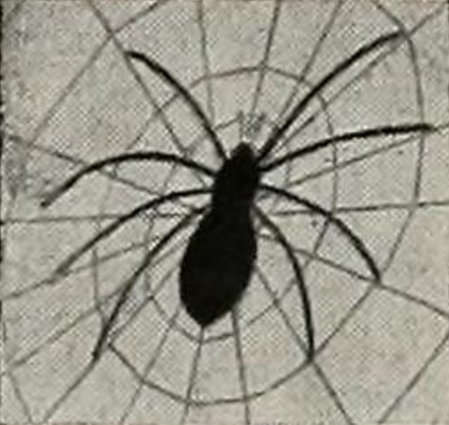 The Spider Pool  Photo via the  Californian  (1949)