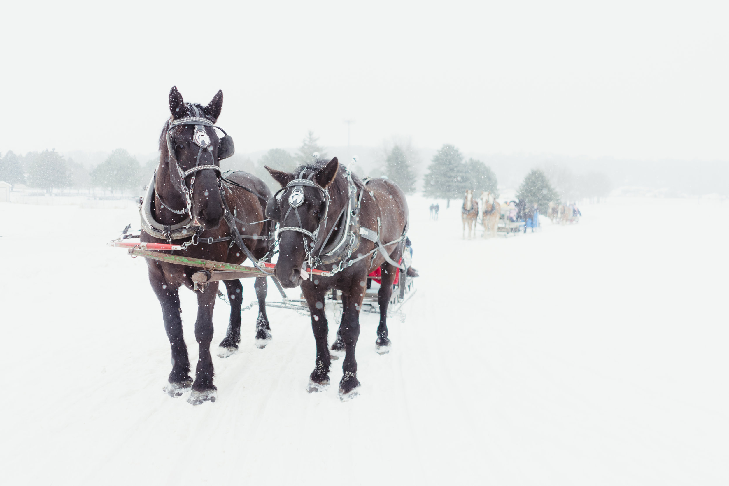 - ROCHESTER MN,OLMSTED FARM HORSE RIDES -PHOTOGRAPHER