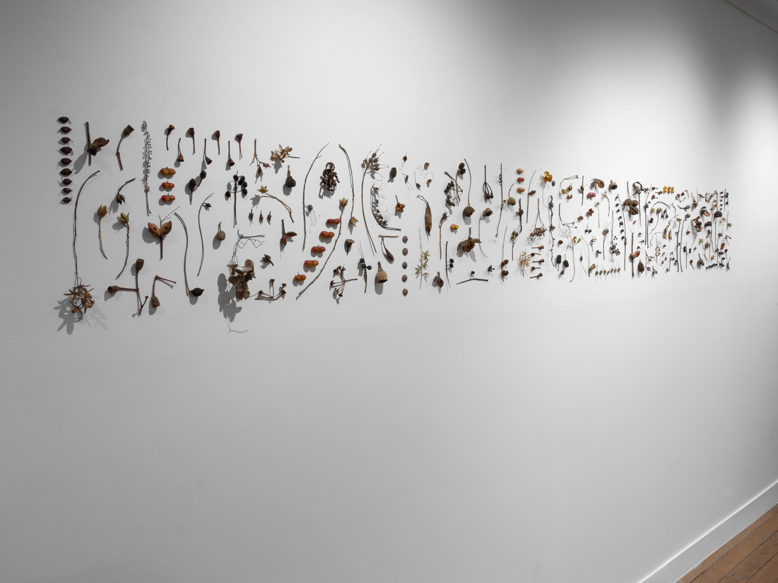 Sarah Rayner,  Seedpod Taxonomy  installation at Onespace Gallery, 2018, Australian native seedpods and pins. Photo: Carl Warner.