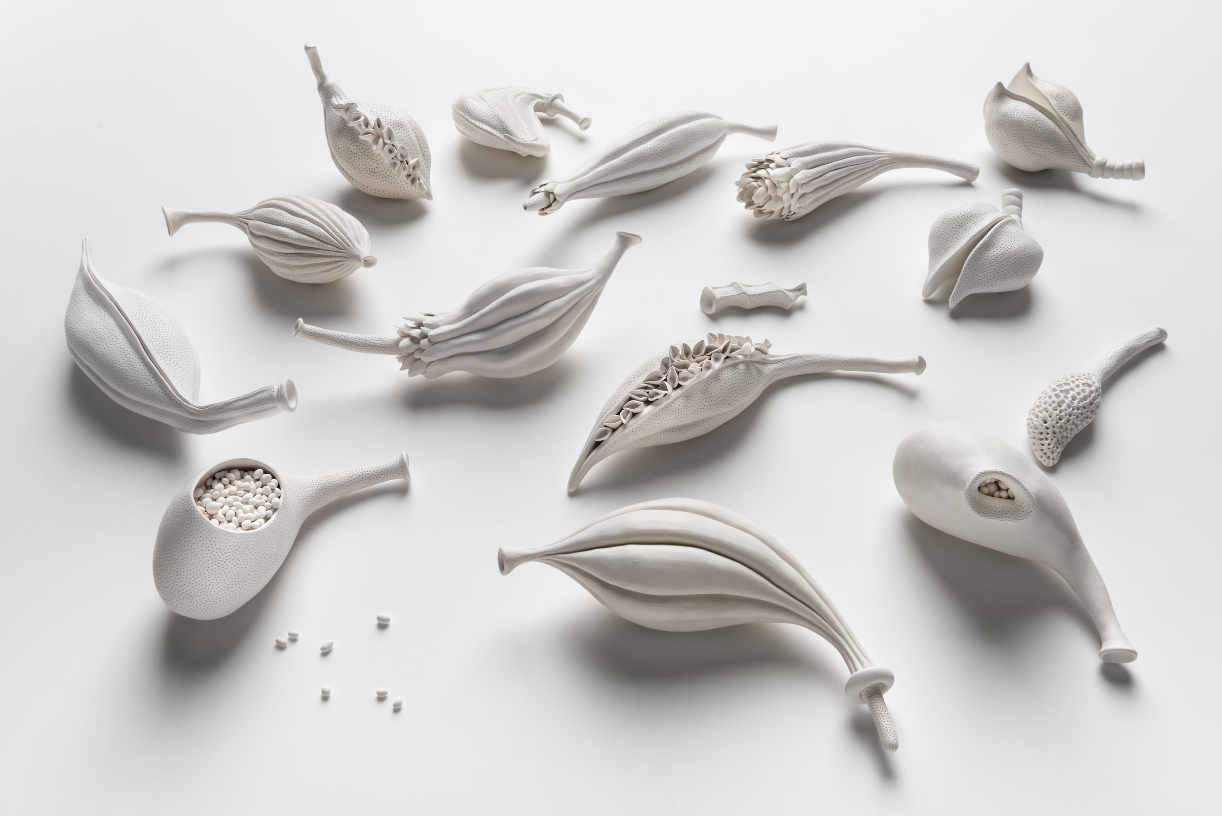 Sarah Rayner,  Gynoecium collection , 2018, hand carved porcelain, Terra Sigillata, 1000c, various dimensions, Photo: Greg Piper.