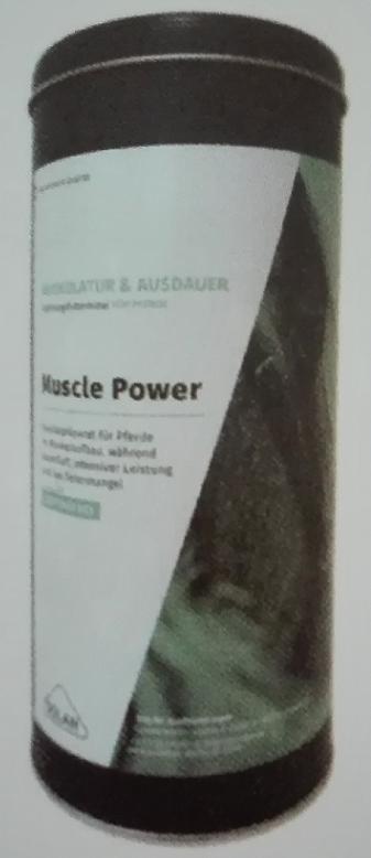 Muscle Power - · Spezialpräparat, welches unterstützend zu effektivem Training zum Muskelaufbau verabreicht wird· hilft Verspannungen zu lösen und verbessert den Muskeltonus· Unterstützt die Regeneration bei starker körperlicher Belastung (Turniereinsatz)· dient zur Optimierung des Vit E-, Selen-, Lysinhaushaltes und des Methionin Status· erhältlich in 900g Dose für 45 Tage