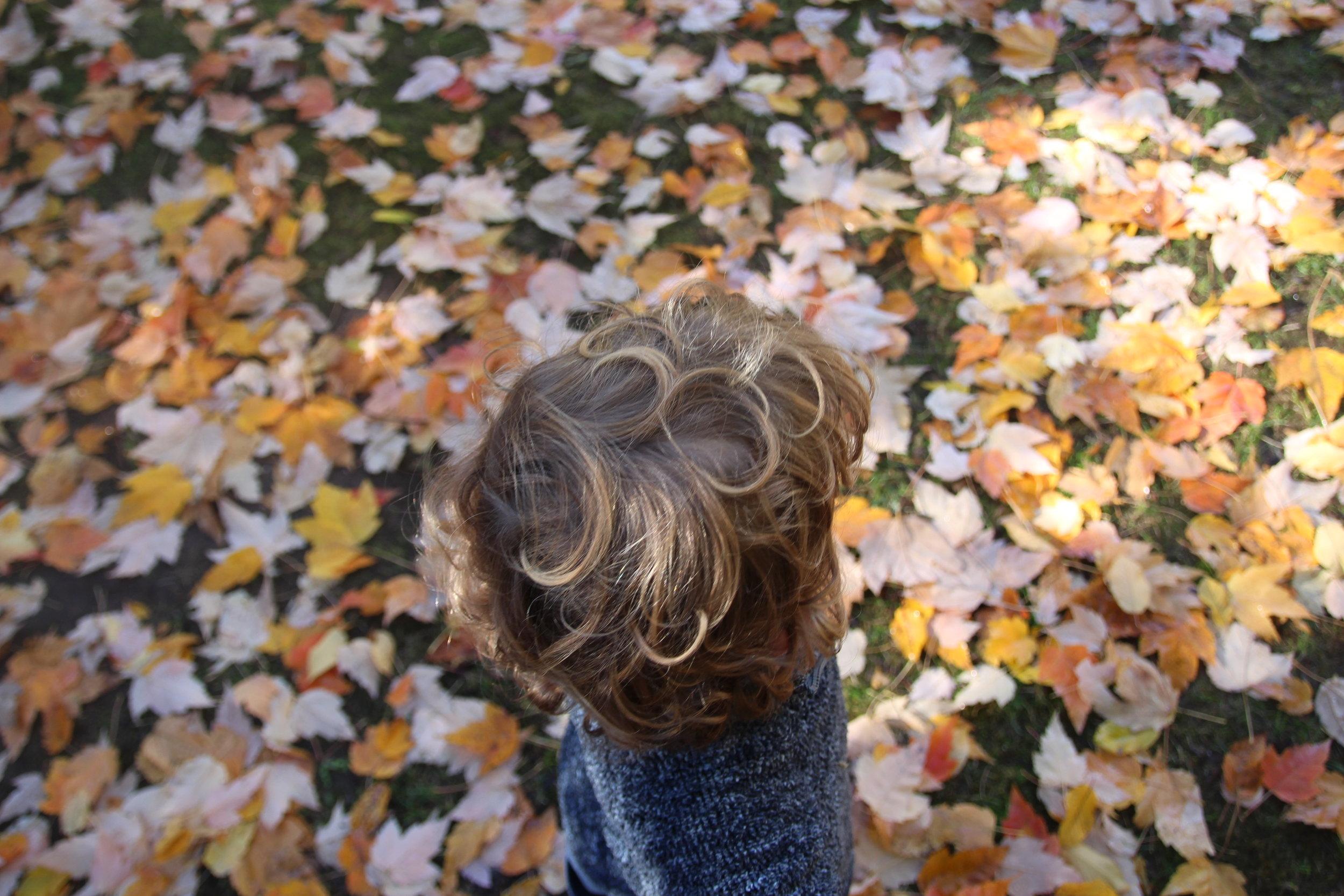 autumn - 9.jpg