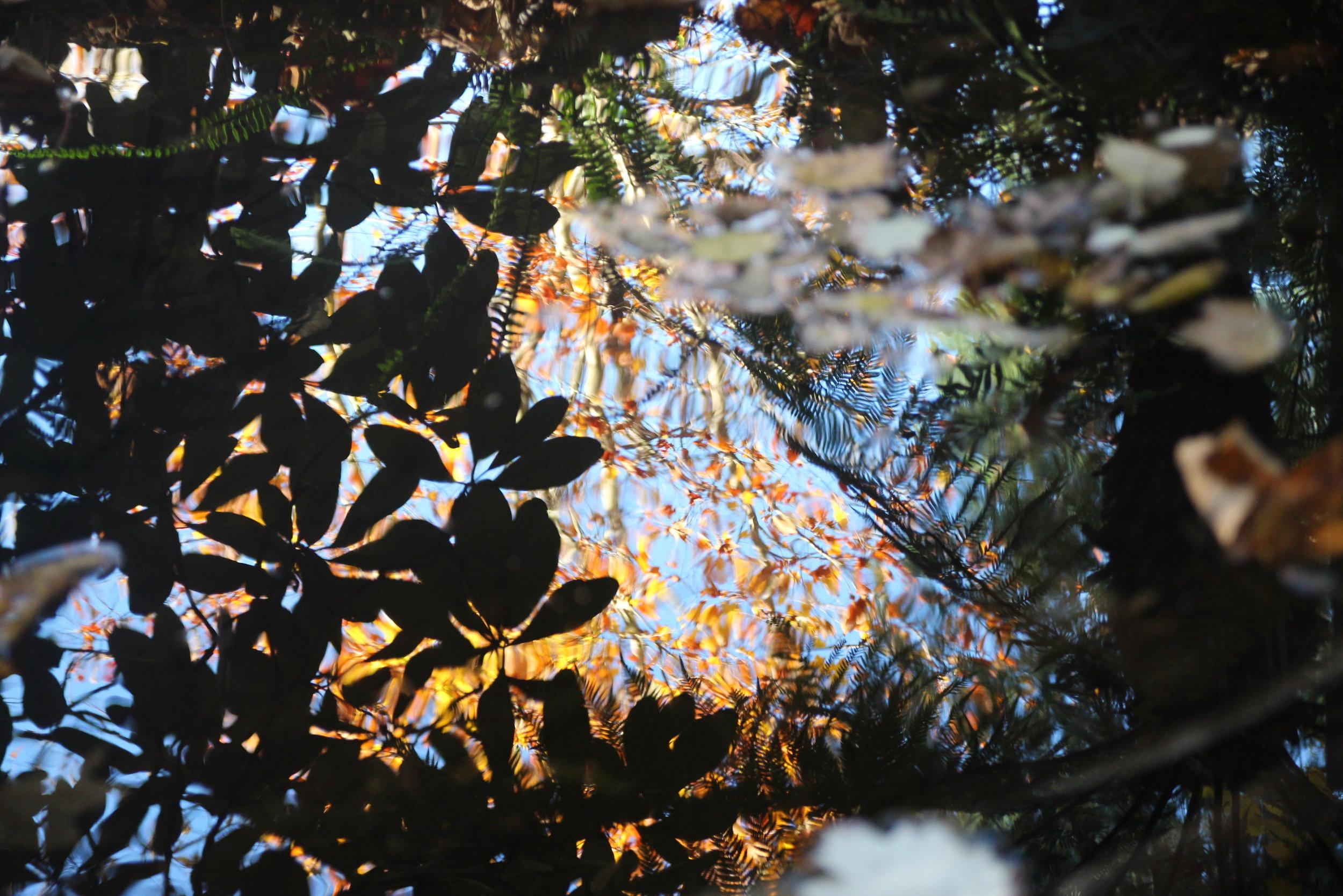 autumn - 11.jpg