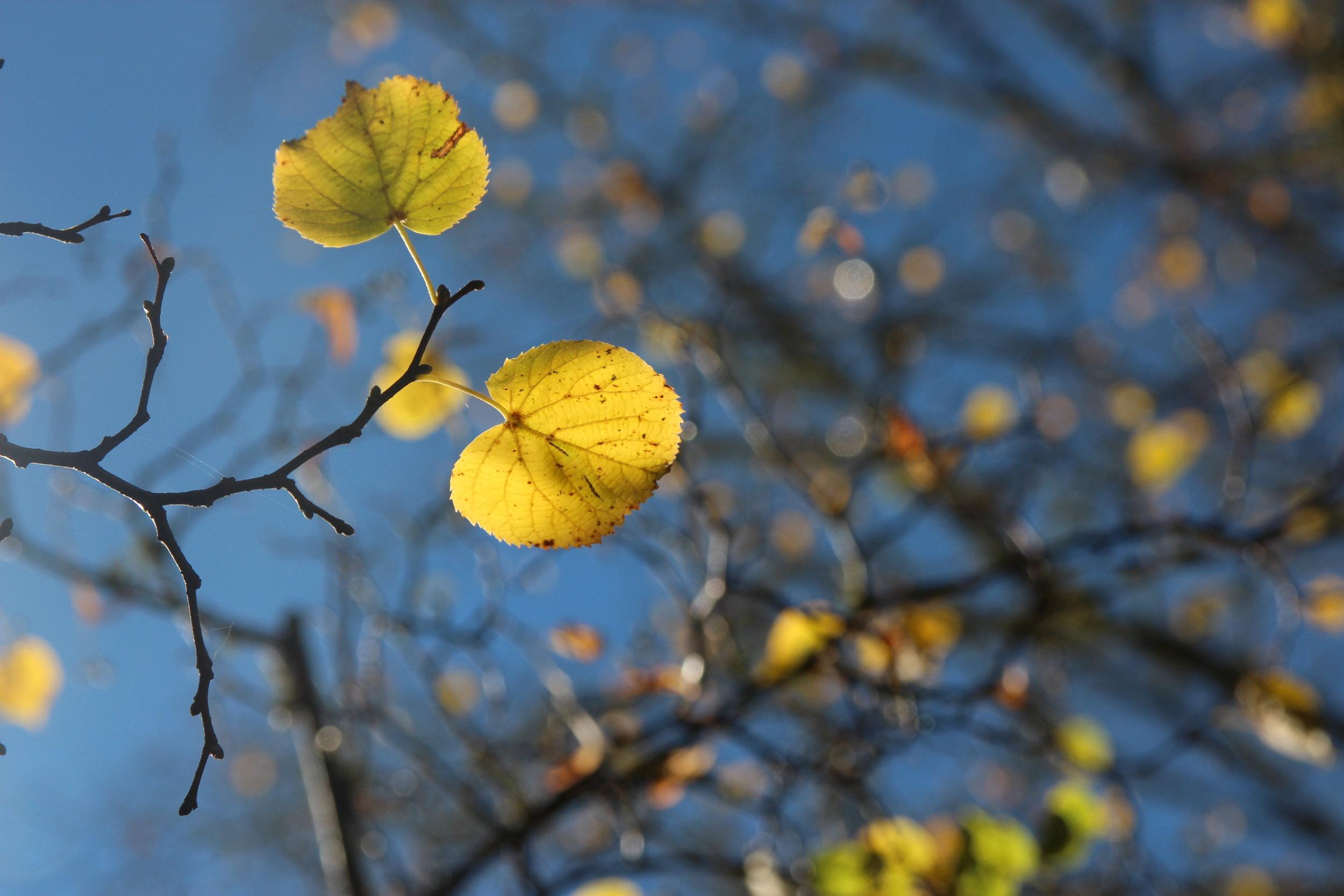 autumn - 12.jpg