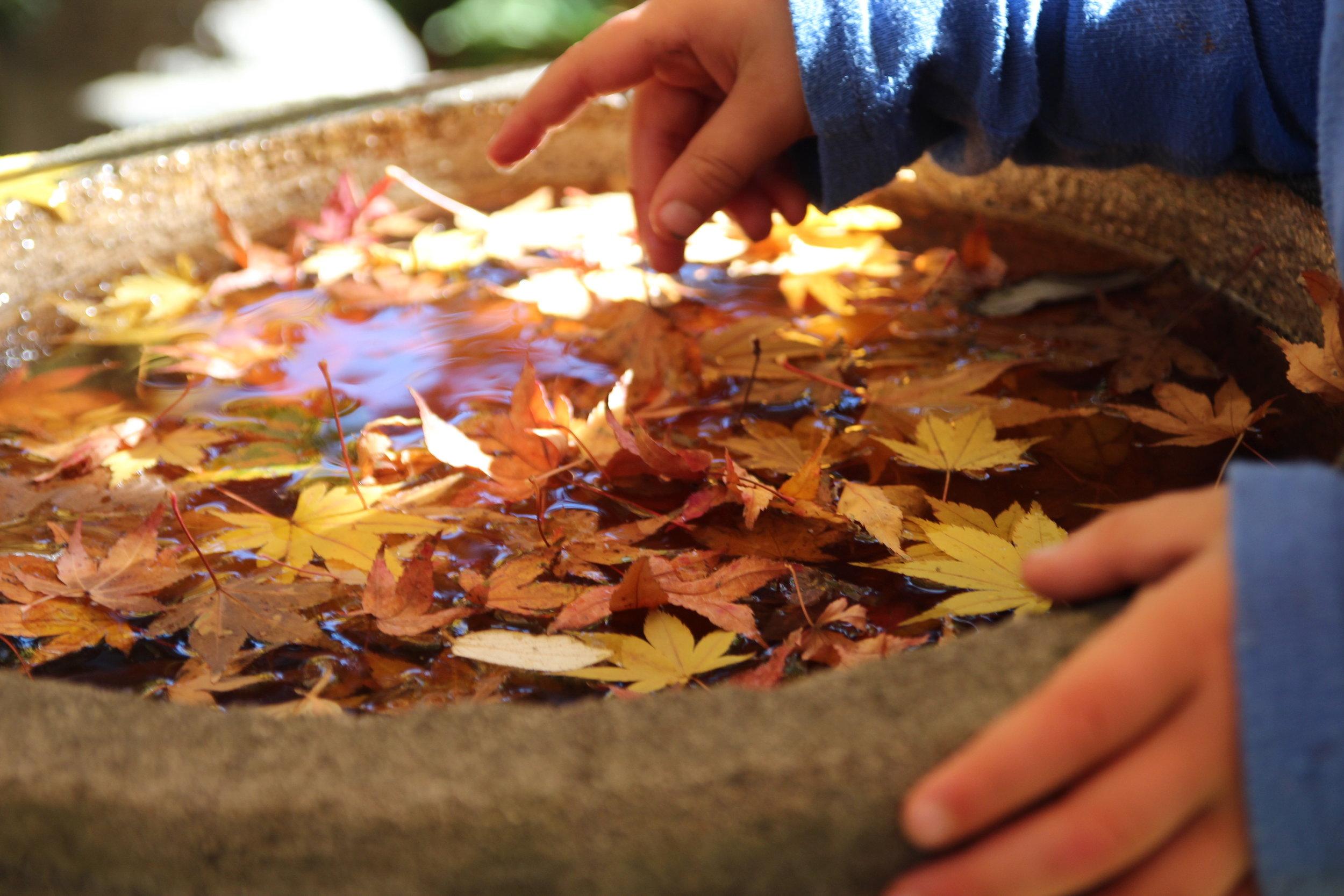 autumn - 16.jpg
