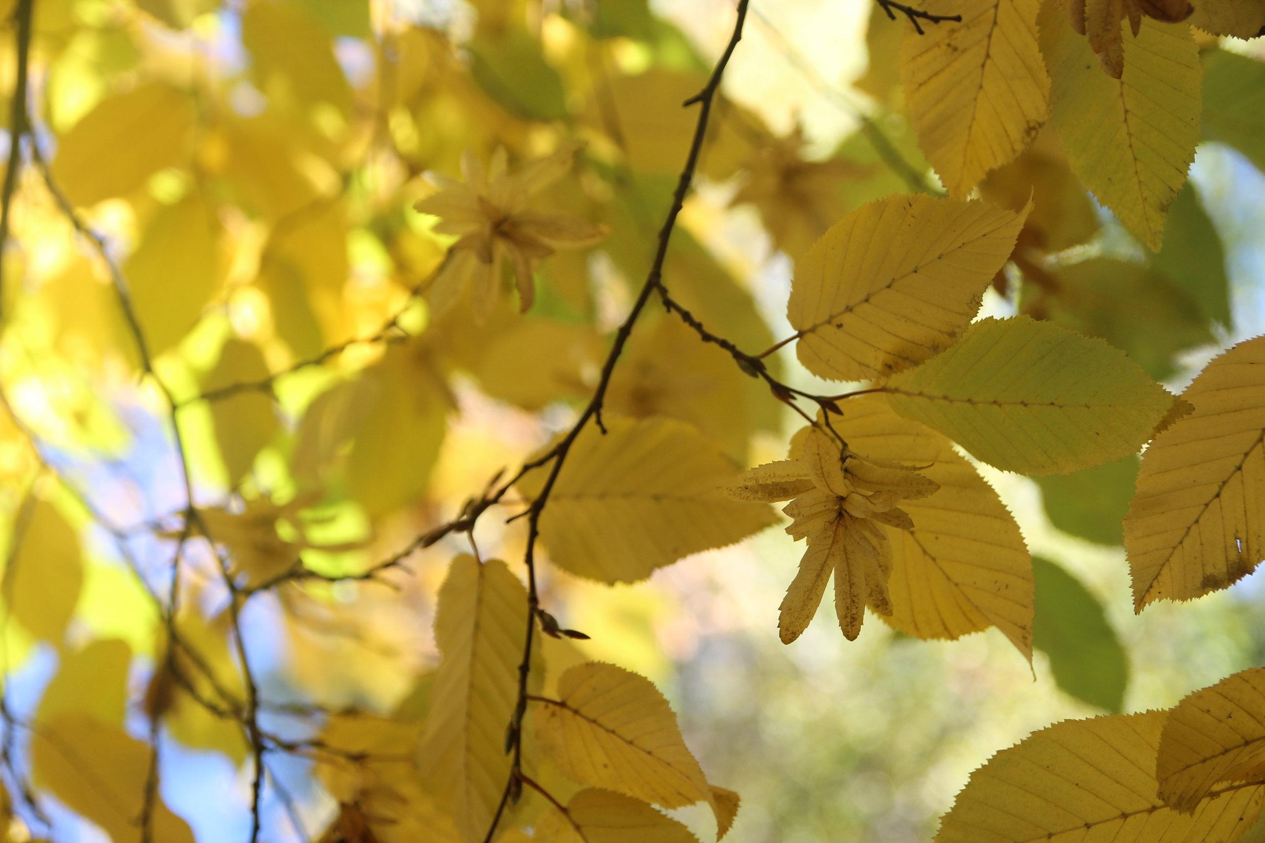autumn - 10.jpg