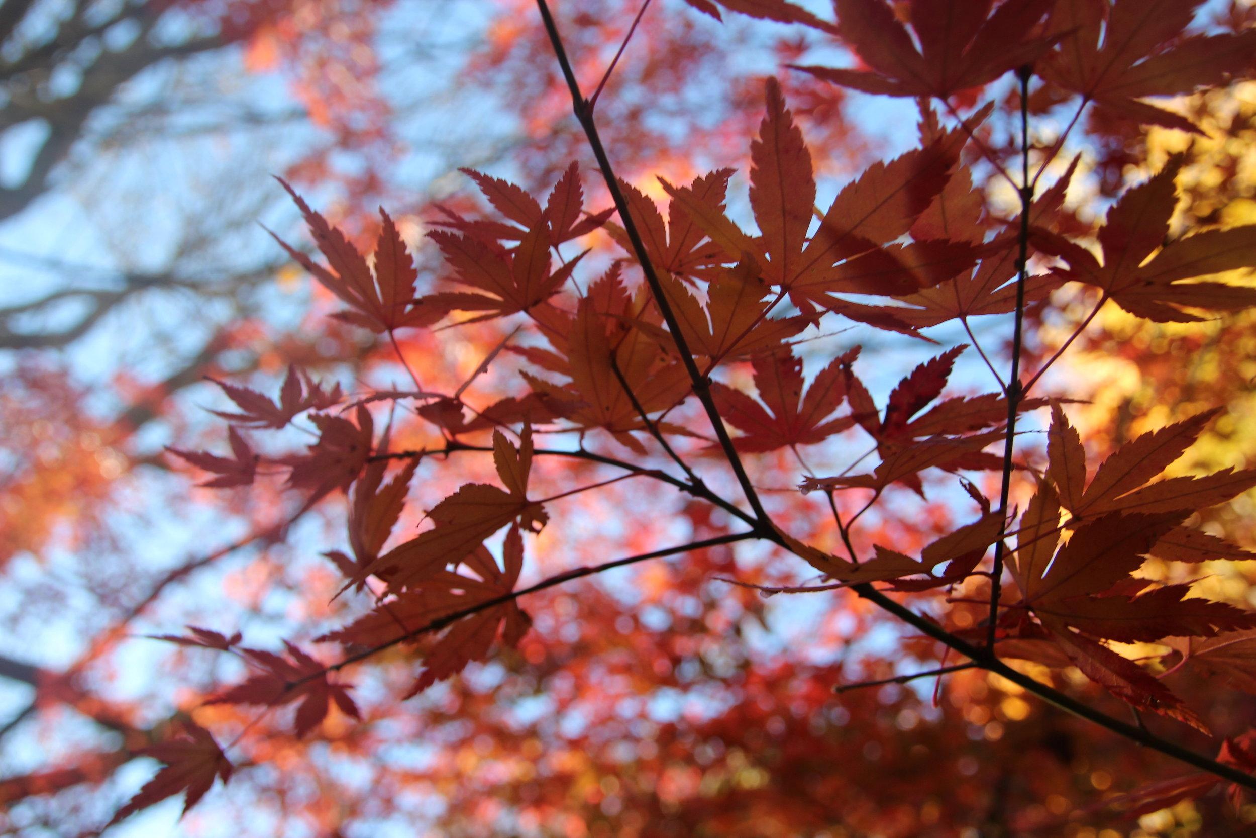 autumn - 3.jpg