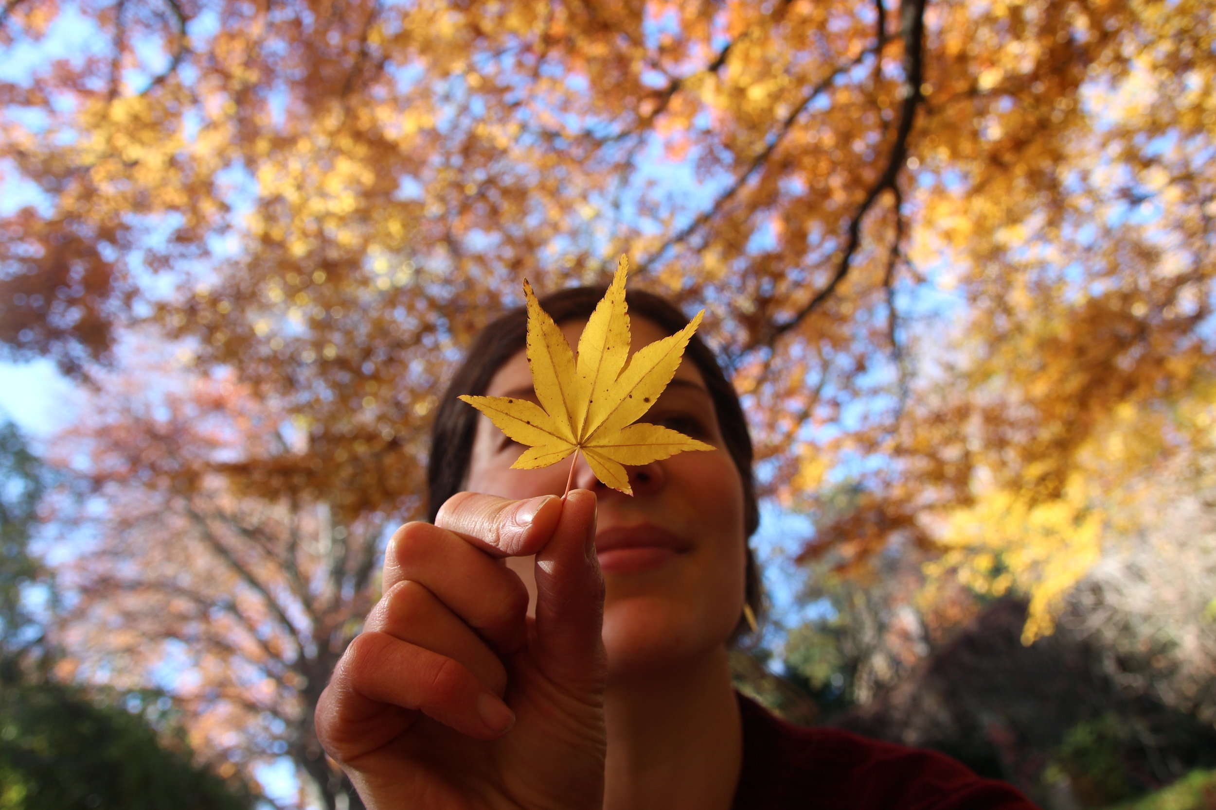 autumn - 14.jpg