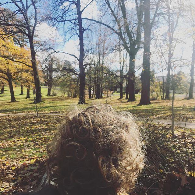 Wintering with my curly heads... #seasons #getoutdoors #wintering #savourtheseason #curlyhairedboys #parklife #twoyearolds #sunshine #vitaminn