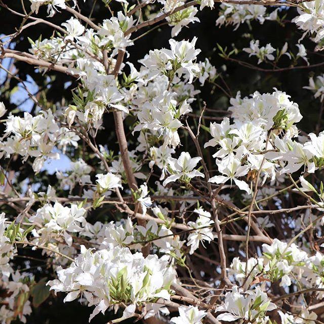 Friyay! 🌸🌸🌸 #mood #fridayflowers #flwrs #alwaysflowers #artprints for #beautyseekers #flowerlovers #letsspeakinflowers #bloombyarmihelena