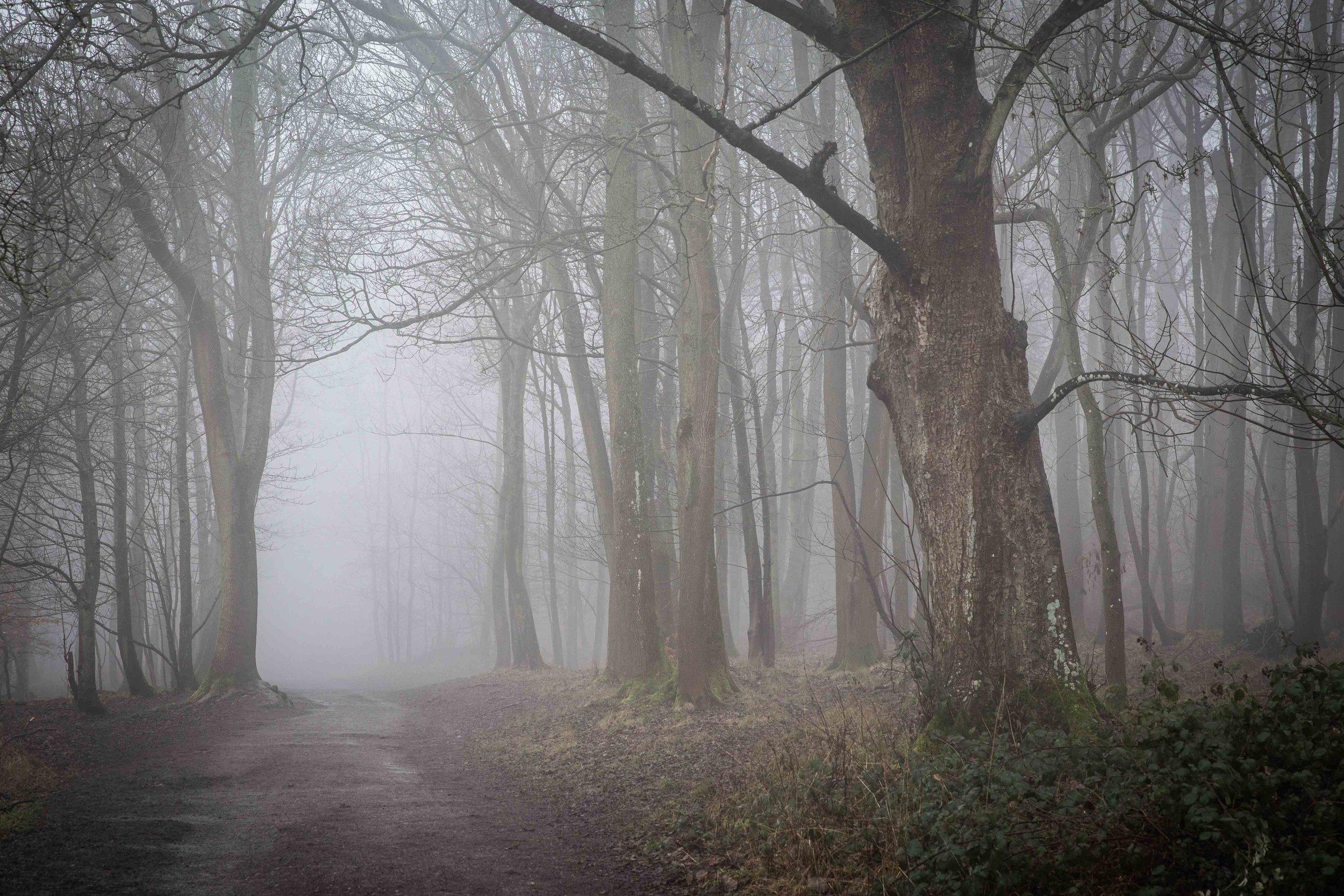 WalkingWorkshops-9096.jpg