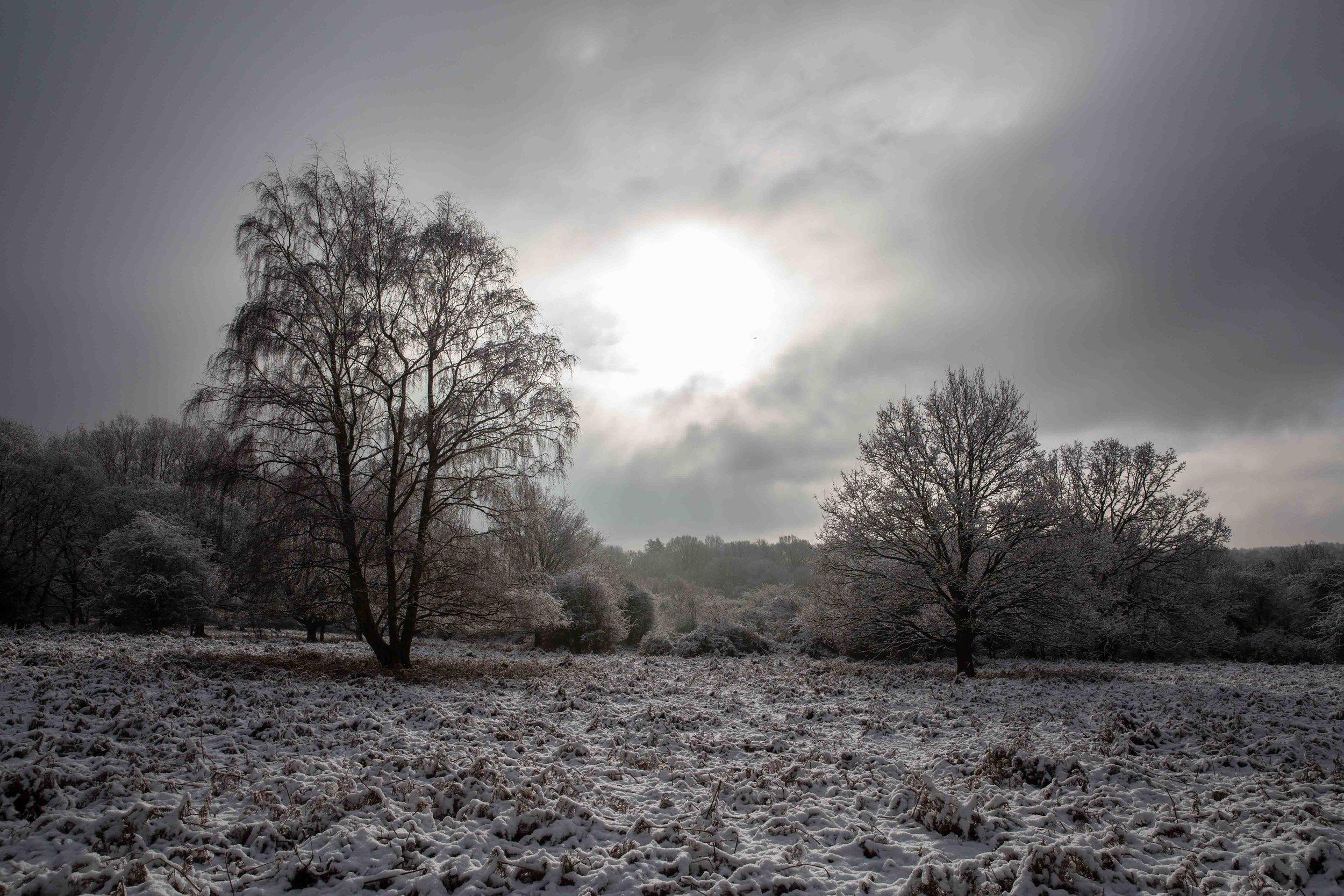 Snow 2019-8985.jpg