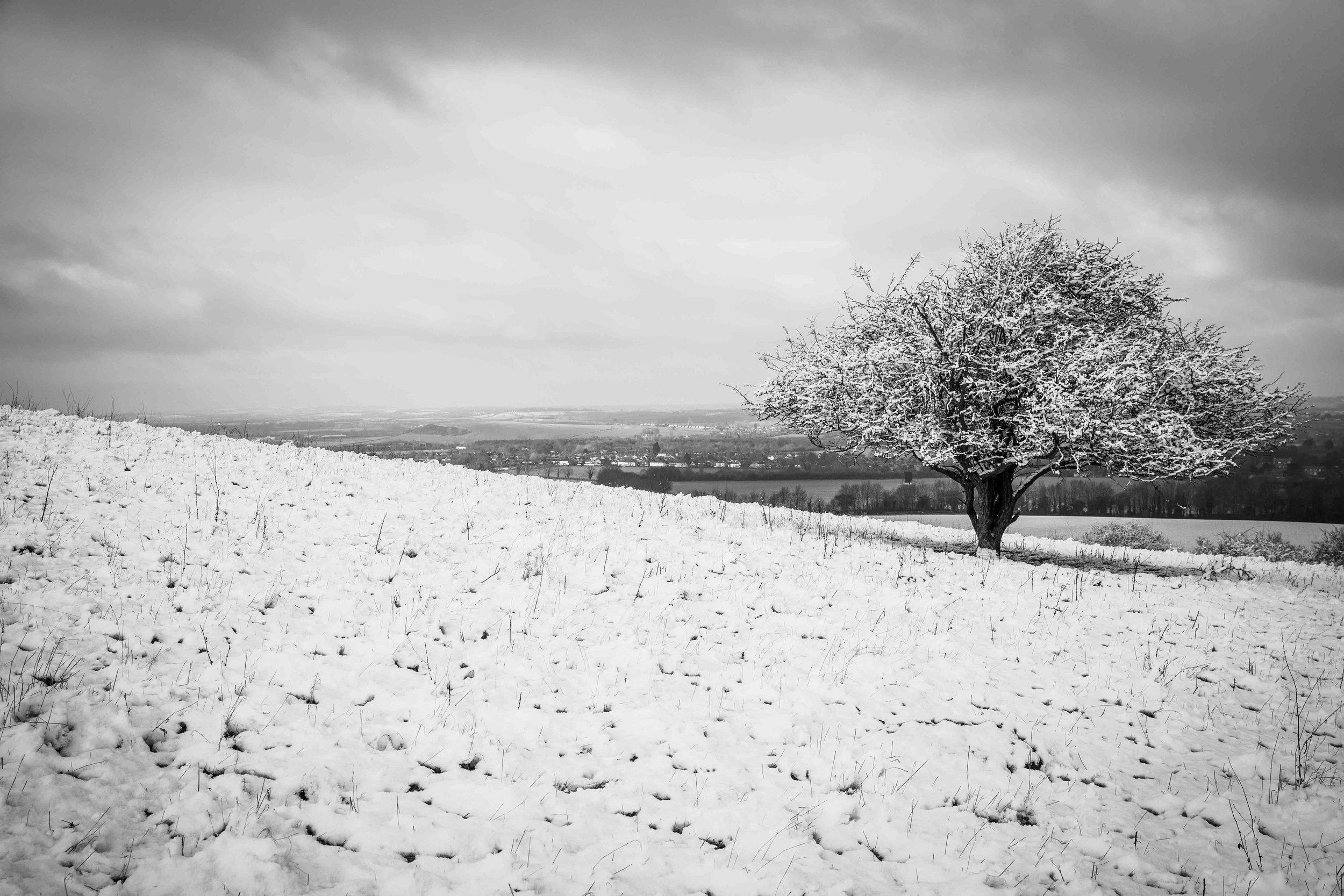 Snow 2019-9011.jpg