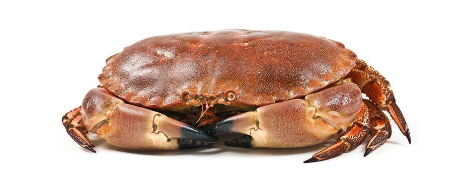 Hel krabbe 2.jpg