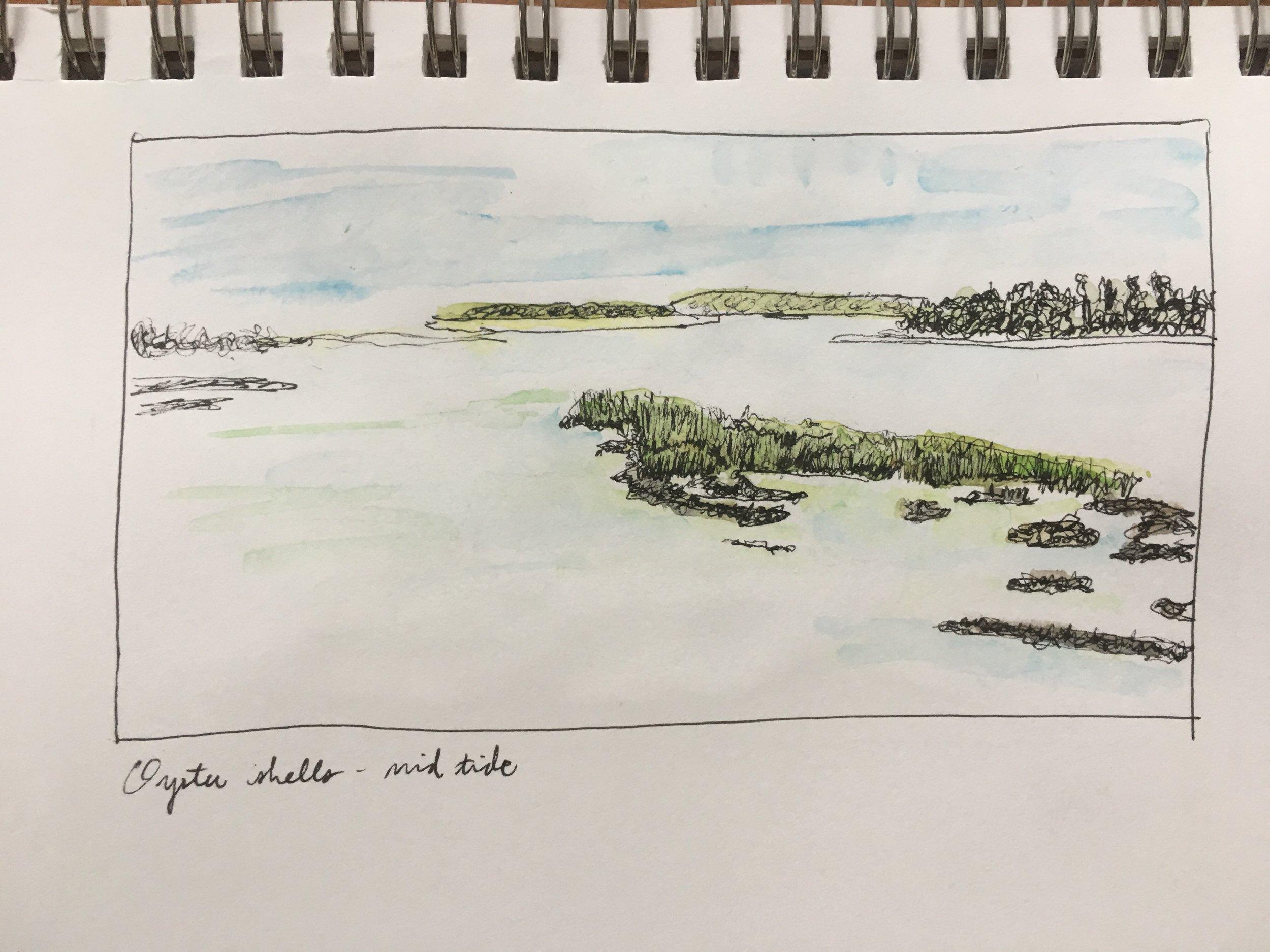 Oyster Shells, mid-tide, Hilton Head, SC