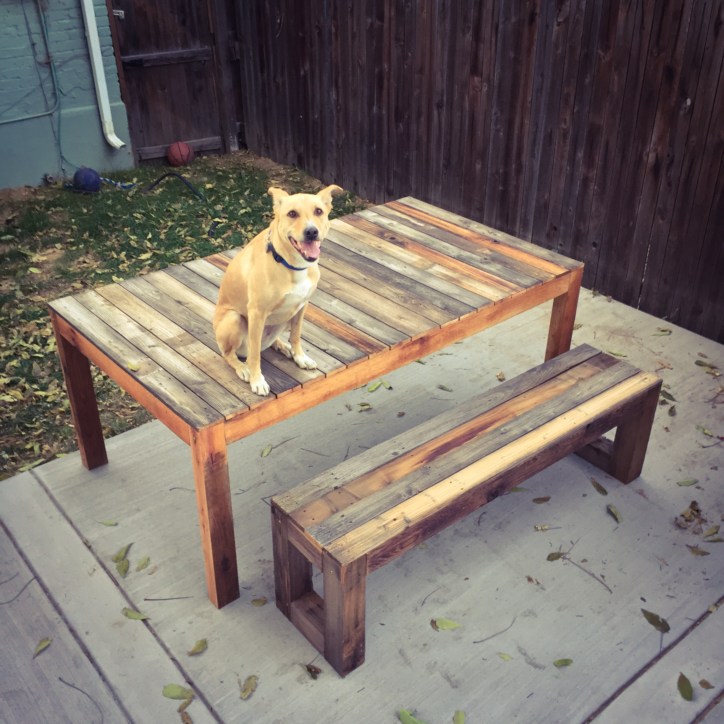 Reclaimed outdoor table, bench and shop dog.