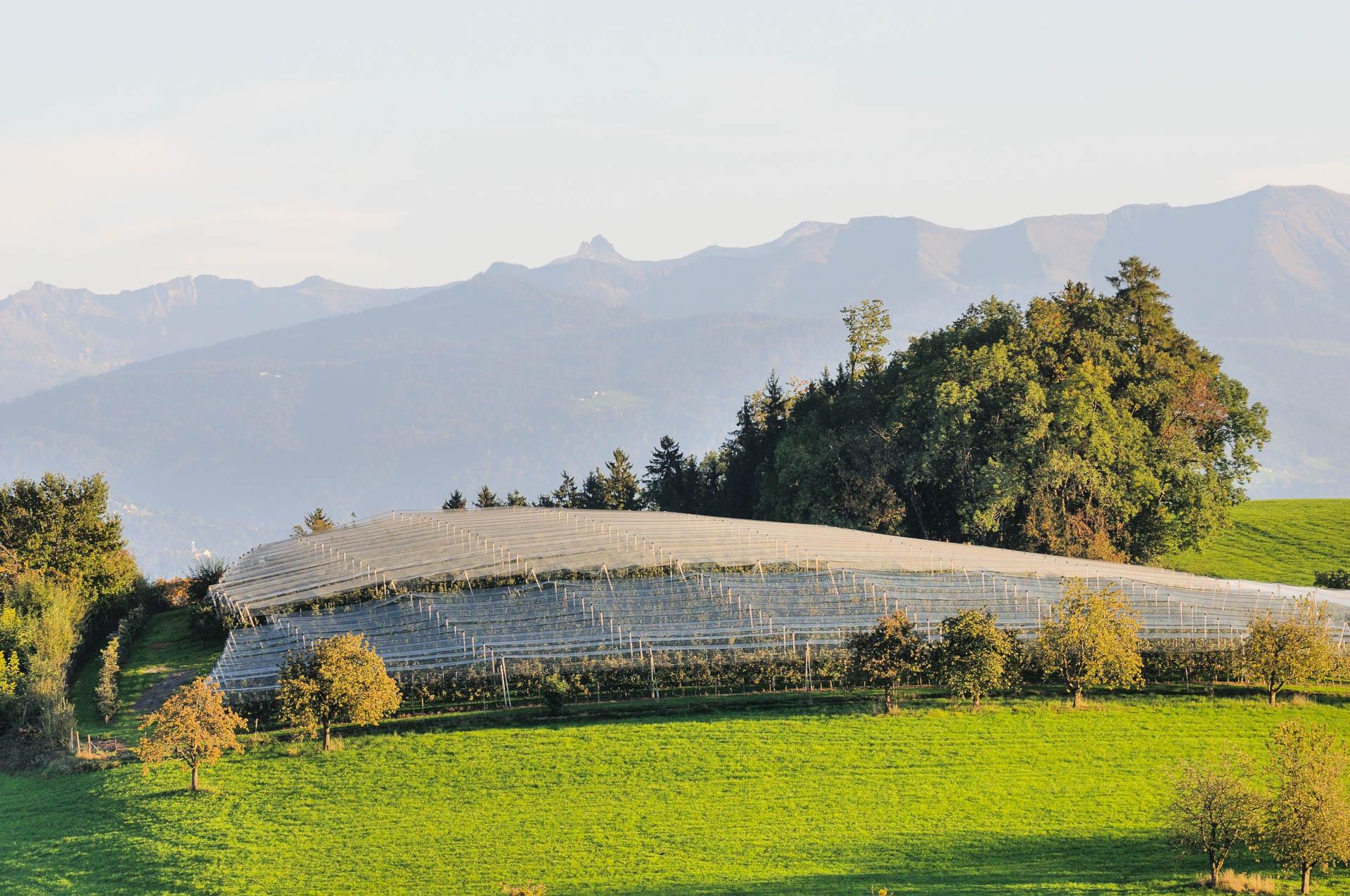 Traumhafter Alpenblick vom Gasthaus Seerose in Nitzenweiler bei Kressbronn am Bodensee