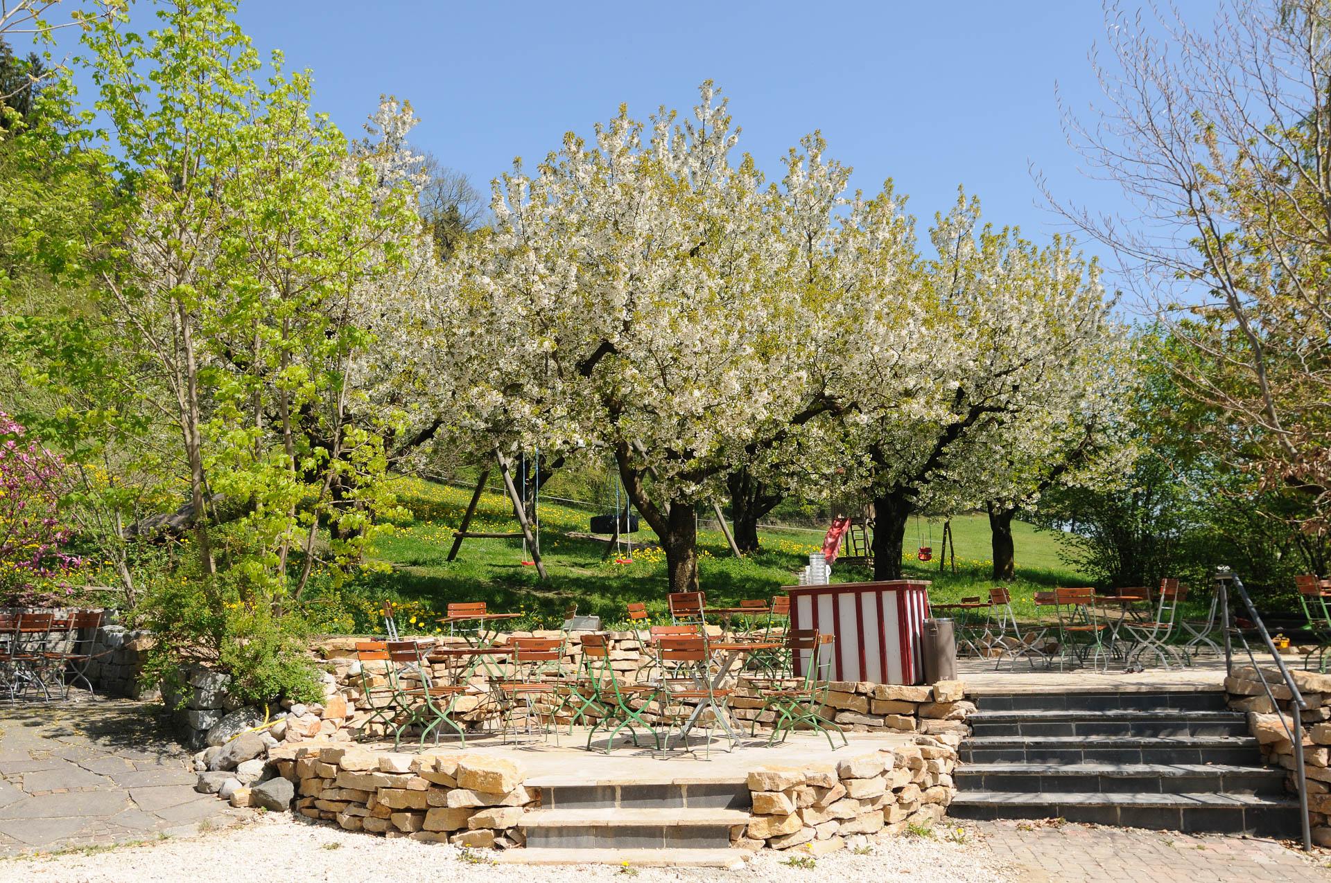 Obstblüte im Biergarten des Gasthaus Seerose in Nitzenweiler bei Kressbronn am Bodensee