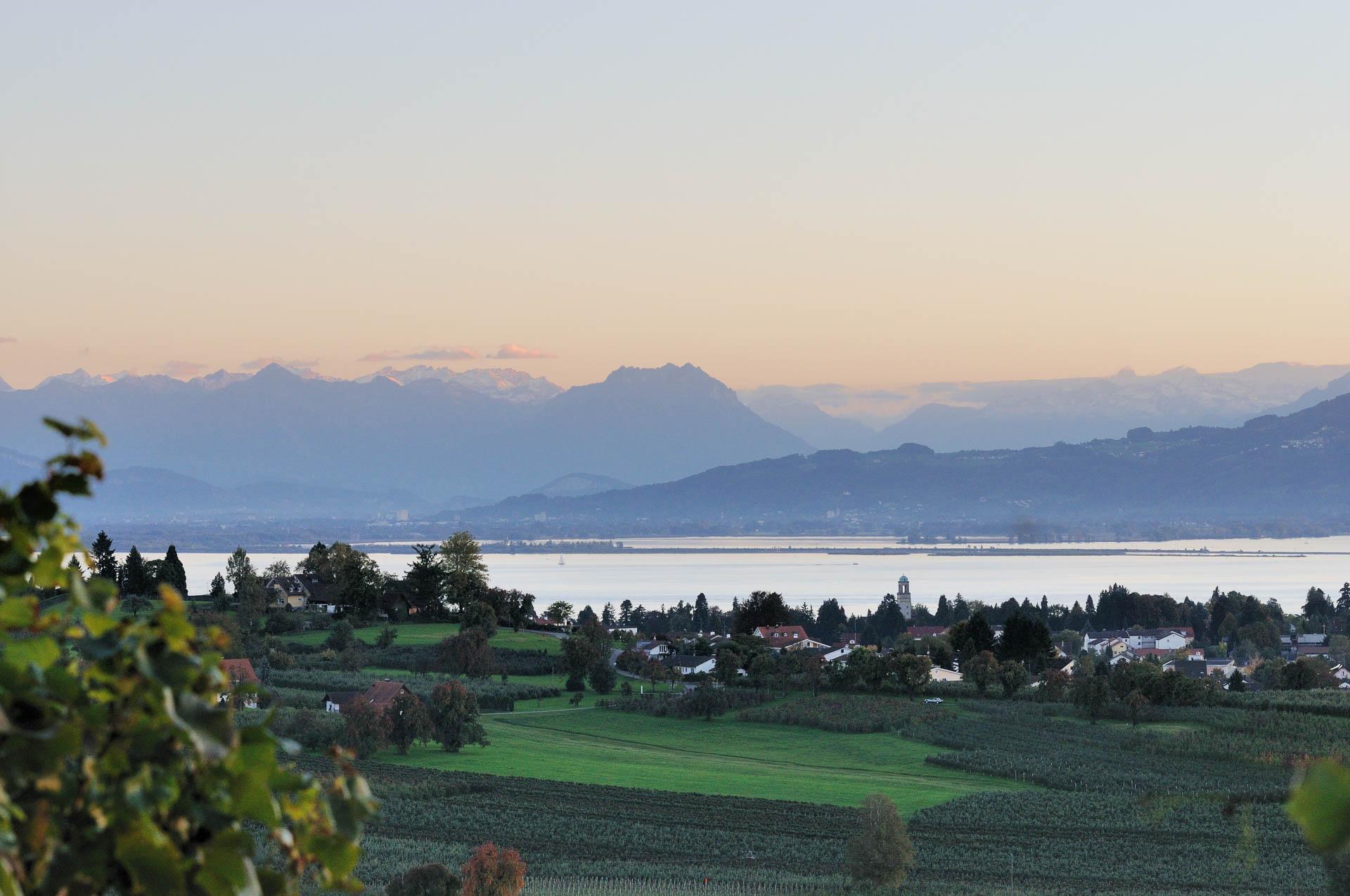 Die alte Kulturlandschaft am Bodensee mit Obst-und Weinbau, immer die Alpen und den See im Blick.
