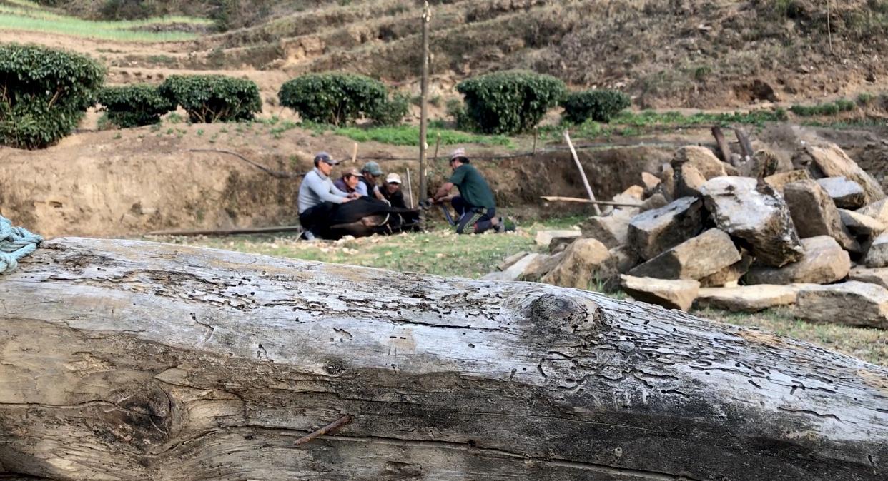 cow_nepal.jpg