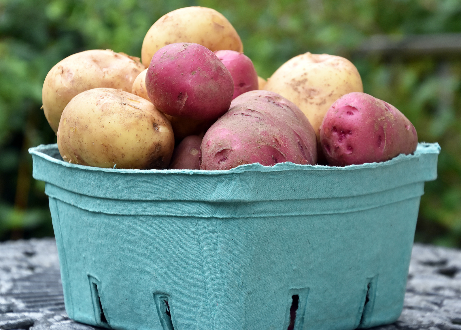 organic-farm-potatoes.jpg