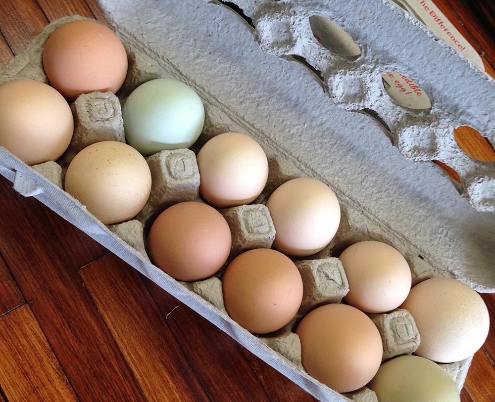 pastured-eggs.jpg