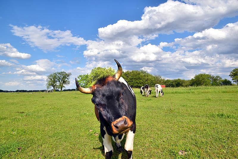 grass-fed-beef-3.jpg