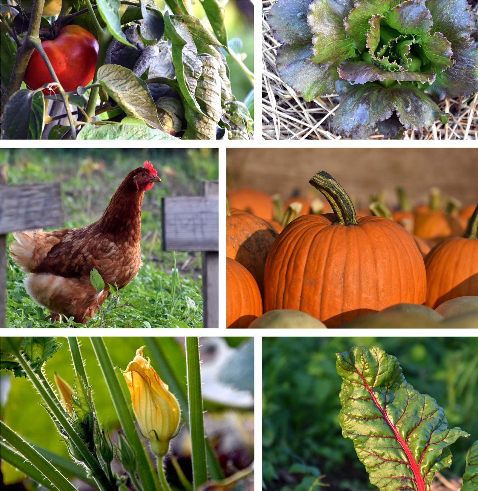 organic-farm-garden-2.jpg