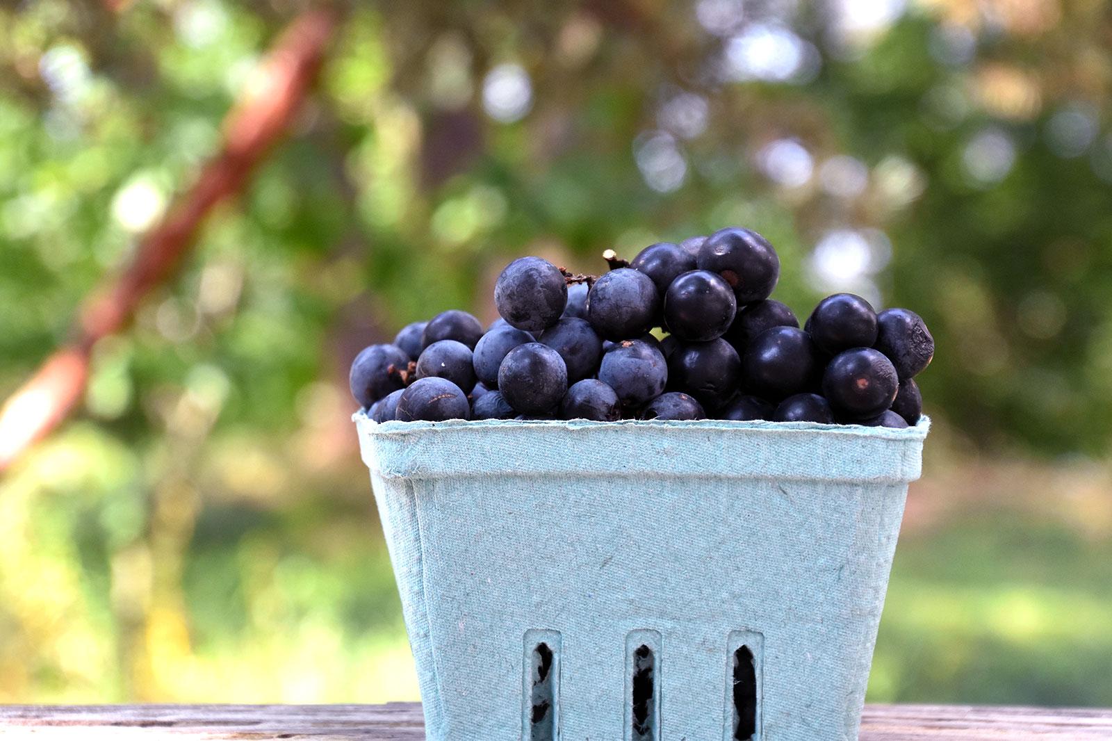 organic-indiana-grapes.jpg