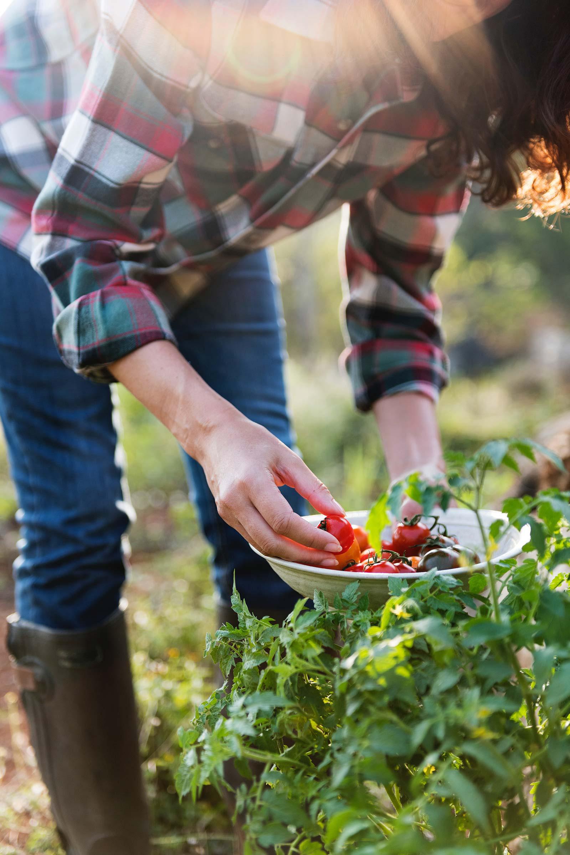 tomato-season.jpg