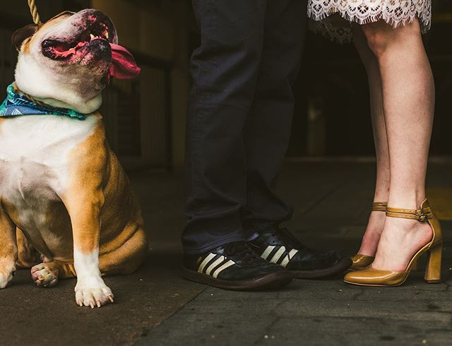 Dogs in engagement sessions man!  Can't beat it!  #rvaengagements #bulldogsofinstagram